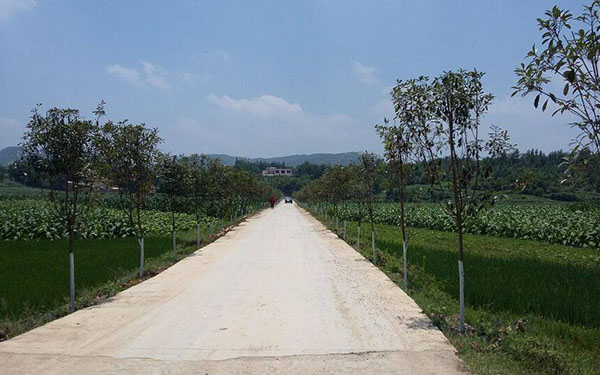 Rural roads important to poverty-relief in China
