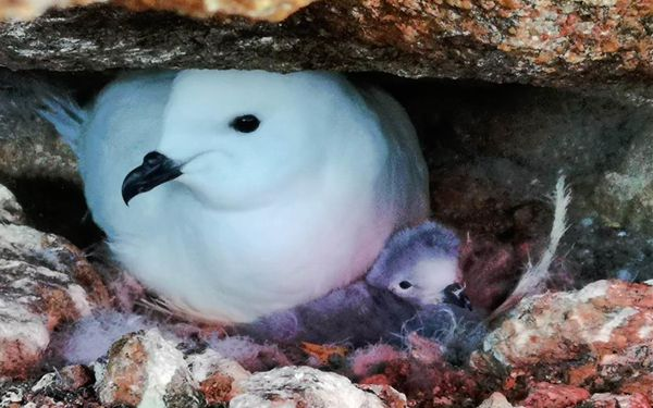 Infrared cameras used by Chinese researchers to monitor Antarctica's snow petrel